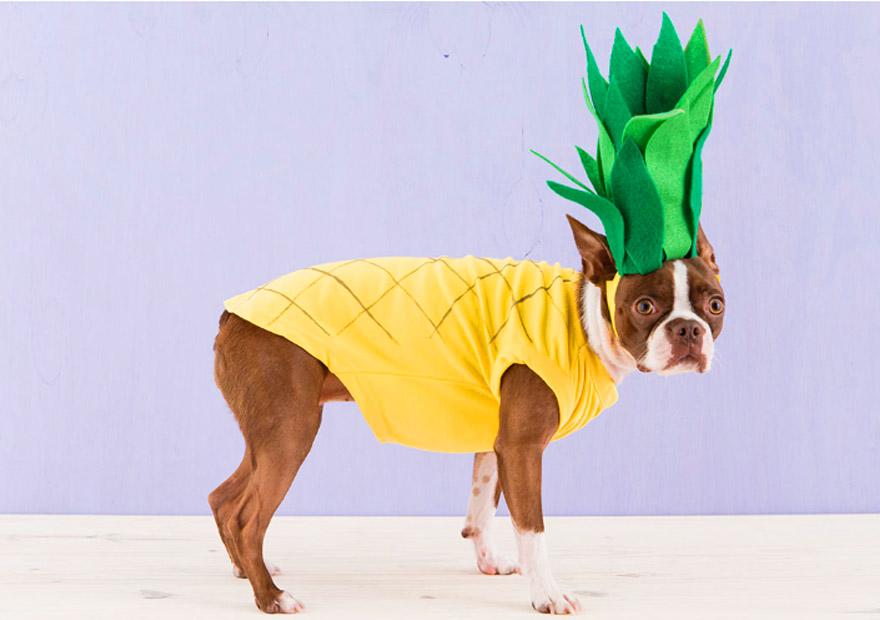 אננס-כלב